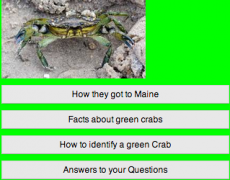 Green Crab App by Max and Hayden